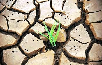 Espoir contre sécheresse